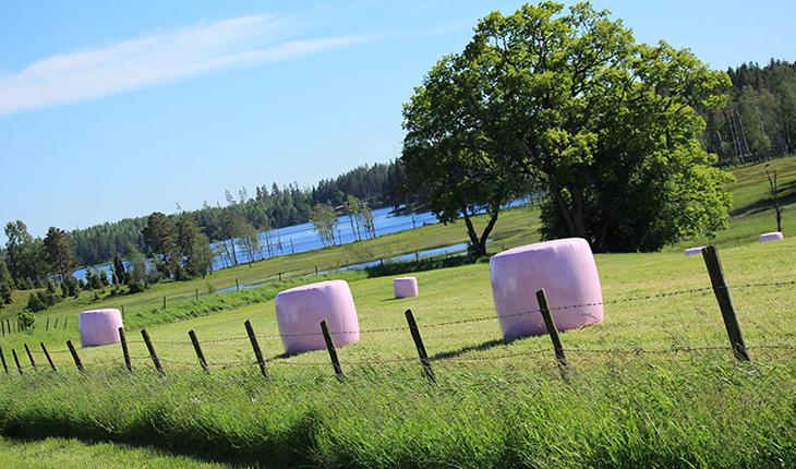 Norske bønder støtter brystkreftforskning